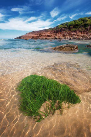 A vertical shot of the clear waters of Kingsley beach on a sunny day with red rocks and seaweeds in New South Wales, Australia