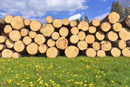 A low angle shot of the logs of wood piled up on a grass-covered meadow on a sunny day