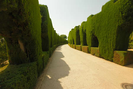 A beautiful road in the middle of big bushes throwing shade over the pathway on a bright sunny day