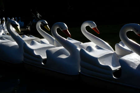 A lineup of swan rides in the lake at a park Stock fotó