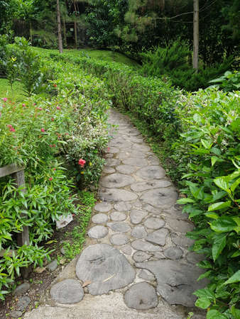 A vertical shot of a pathway in the middle of beautiful green plantations in the forest during daytime
