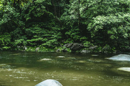 A green muddy river in the middle of a forest