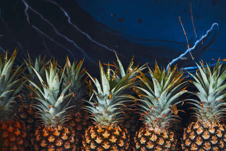 A closeup shot of pineapples aligned in front of a blue wall. Perfect for fruit market scenarios