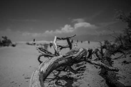 A horizontal greyscale shot of pieces of wood in Death Valley, USA