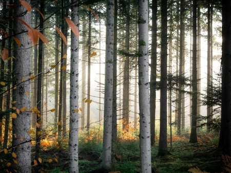 A beautiful shot of a forest with a foggy background at daytime Reklamní fotografie