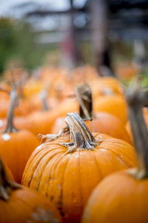 A vertical closeup shot of fresh pumpkin on a blurred background - perfect for a Halloween article Standard-Bild