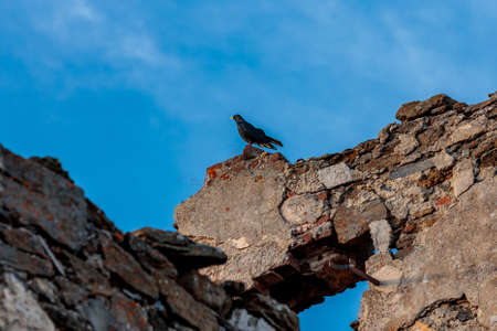 A low angle shot of a beautiful Alpine chough bird sitting n a stone under the sky