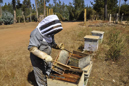 A beekeeper harvesting delicious honey from a honeycomb created with love