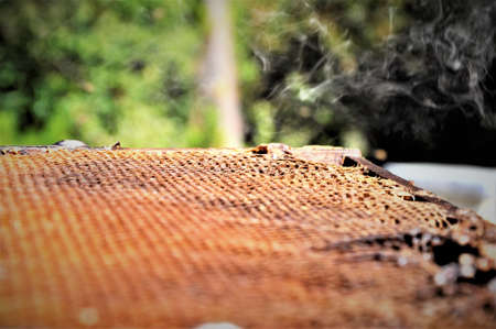 A low angle closeup shot of bees creating a honeycomb full of delicious honey