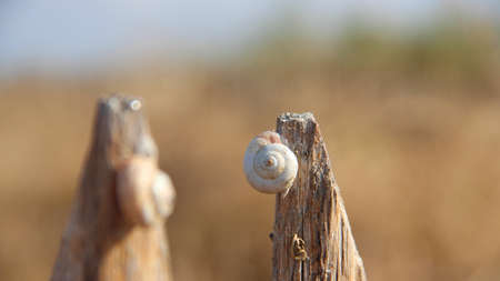 A closeup shot of a snail on a piece of wood with a blurred background 写真素材