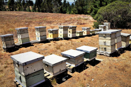 A group of old hives in the middle of a field surrounded by a green scenery on a beautiful day