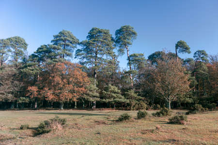 A beautiful shot of a lot of trees in the New Forest, near Brockenhurst, UK Stock fotó
