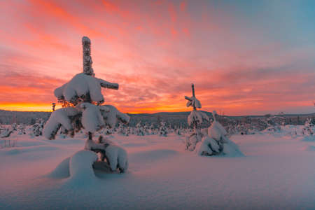 A magnificent view of trees buried under snow and a beautiful sunrise in the background in Norway