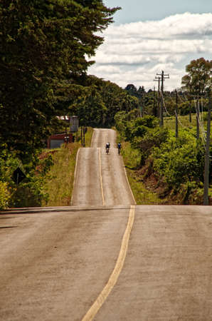 A vertical shot of two bicycle riders riding on a country road in the middle of forests