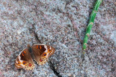 A closeup shot of a butterfly and a green plant on a concrete gray surface