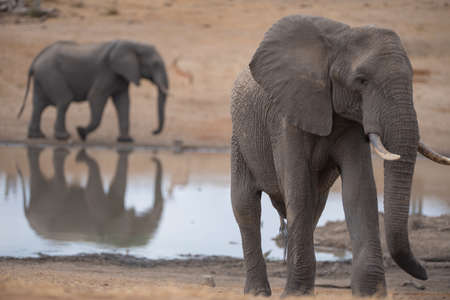 A closeup shot of an elephant walking up the hill