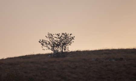 A gloomy landscape with a single tree in Istria, Croatia 版權商用圖片