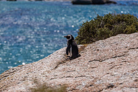 A selective focus shot of a cute penguin standing at the beach in Cape of Good Hope, Cape Town, South Africa