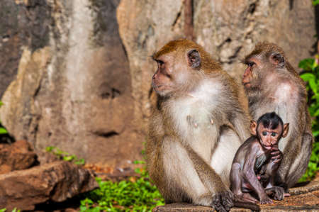 A closeup shot of a cute monkey family near rock formations in a jungle Archivio Fotografico