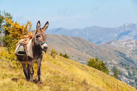 A beautiful shot of a cute donkey standing in the mountains of Mercantour national park in France Stock fotó