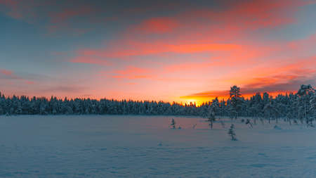 A beautiful view of the trees covered in snow at sunrise captured in Finland Zdjęcie Seryjne