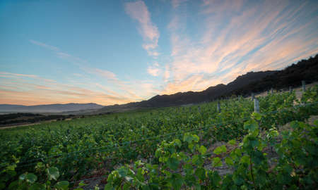 The vineyard in Central Otago in New Zealand under the beautiful sky