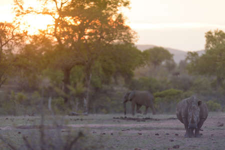 A selective focus shot of a rhino walking around with a blurred background