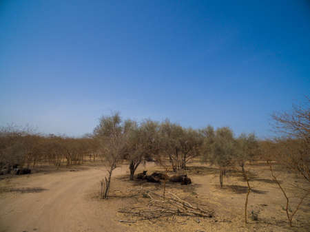 A group of animals hanging out in the middle of a dry field in Senegal