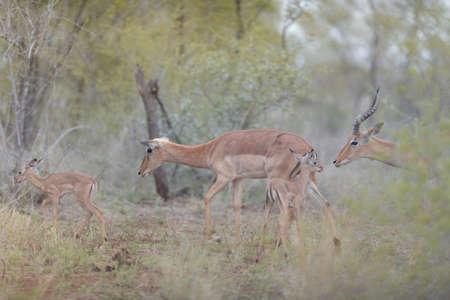 A selective focus shot of deers walking near their babies