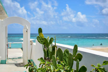 A balcony with cactus plants and the beautiful beach in the background