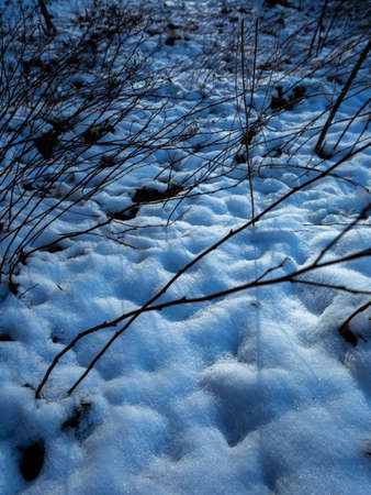 A vertical shot of snow textures in Maksimir, Zagreb, Croatia on a dark day Stock Photo