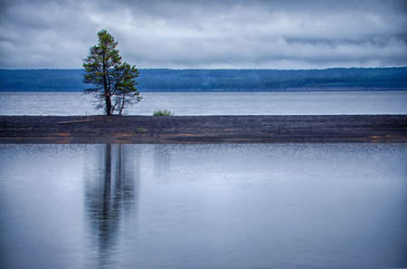 A beautiful shot of a tree reflecting in the calm ocean under the gloomy sky