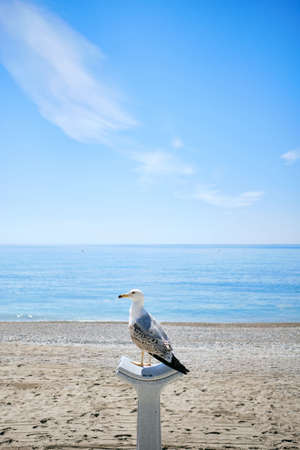 A vertical shot of a seagull on a column by the ocean captured in Menton, French Riviera, France