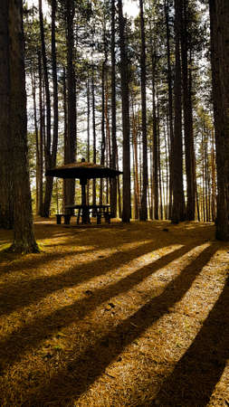 A vertical shot of a pavilion in a forest surrounded by tall trees