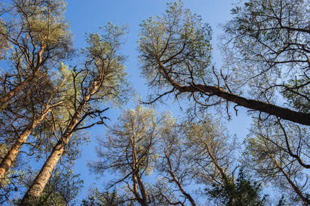 A low angle view of trees under sunlight and a blue sky during daytime