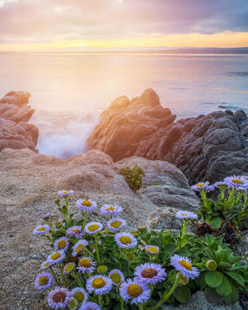 A vertical shot of beautiful daisy flowers near rock formations by the sea under the sunset sky