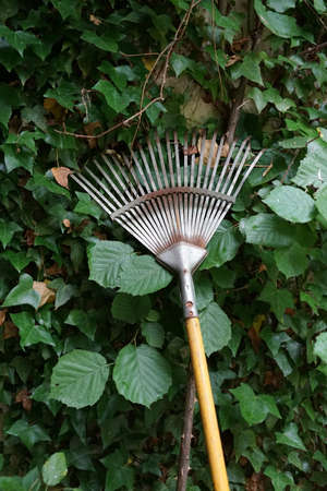 A vertical shot of a rake leaned against plants with green leaves