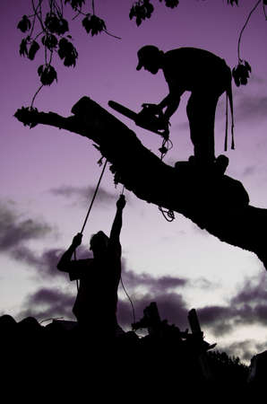 A vertical shot of silhouettes of people cutting the branch of a tree - nature abuse concept Stock fotó
