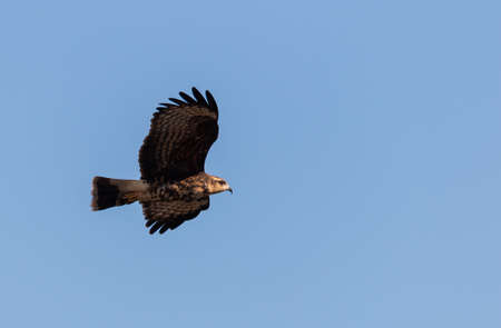 A low angle shot of an eagle flying under the clear blue sky Фото со стока