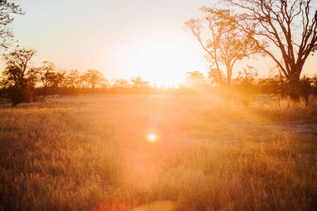 The sun shining over a field spreading warmth and joy around