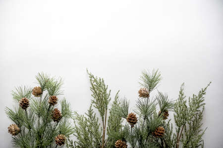 A shot of fir branches with acorns on a white surface with space for a text Stock Photo