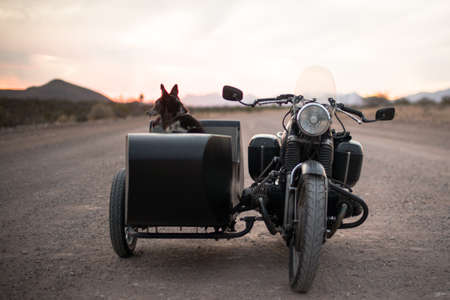 A cute scenery of a dig sitting in a motorcycle parked on the road during sunset Reklamní fotografie