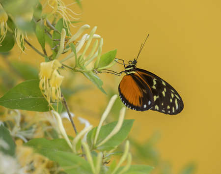 A Gatekeeper sitting on a flower surrounded by greenery under sunlight against a yellow background