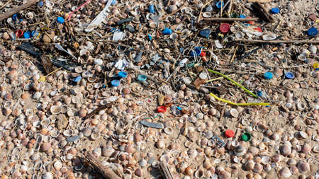 A beach covered in snail shells and plastic rubbish under sunlight