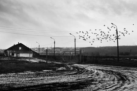 A greyscale shot of a flock of birds flying over a snowy road near a wooden cabin