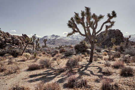 A desert with bushes and trees with mountains in the distance in Southern California Stock fotó