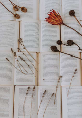 A vertical shot of open books with dry plants over it - great for background or blog