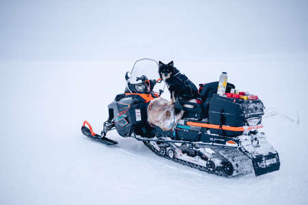 A selective focus shot of a dog sitting on a snowmobile in the north of Sweden