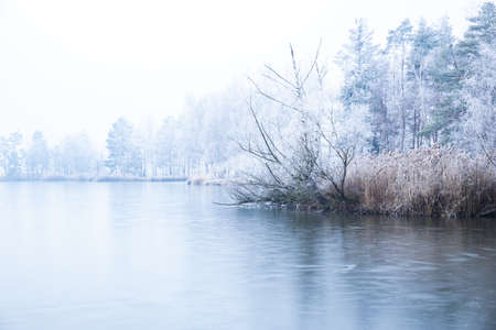 A lake covered with the dense fog near the forest with trees and plants covered with snow