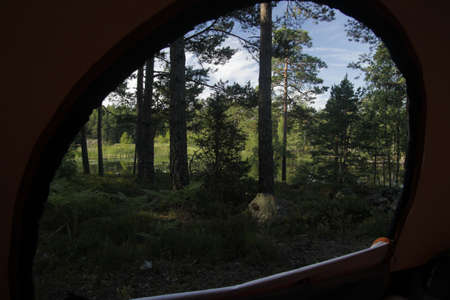 A forest view as seen through a tent entrance